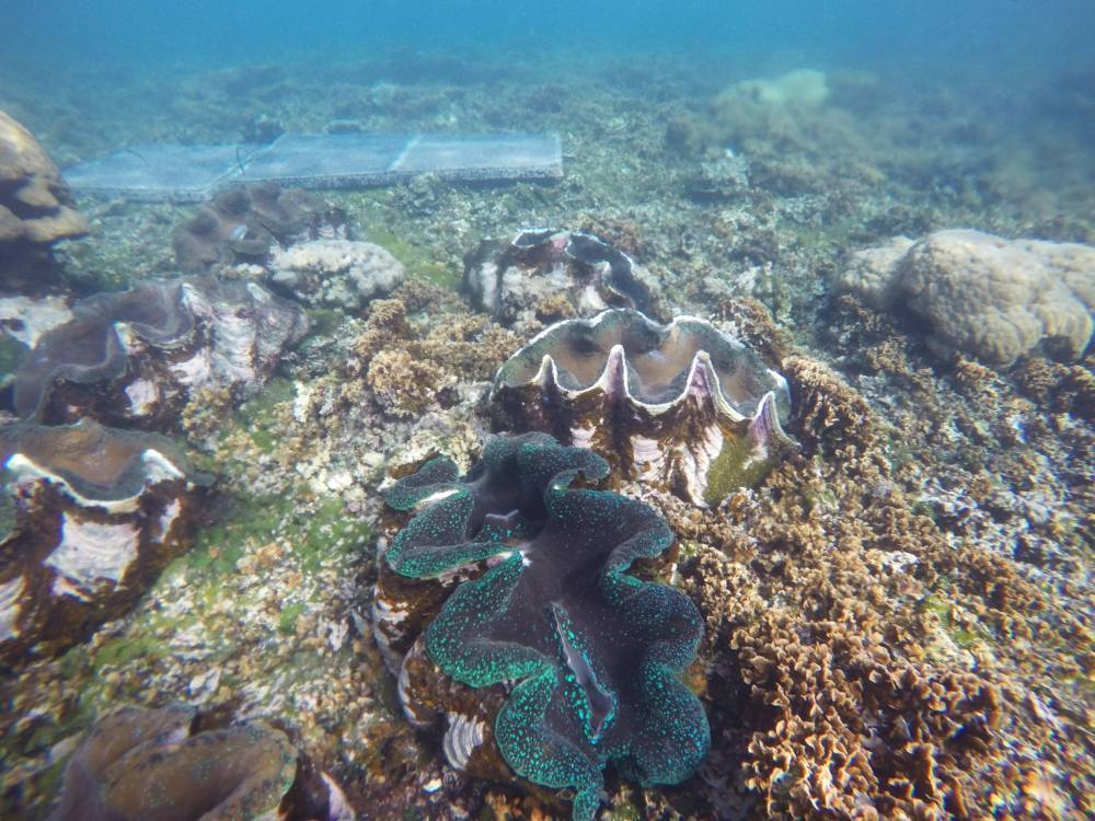 giant-sea-clam-sanctuary