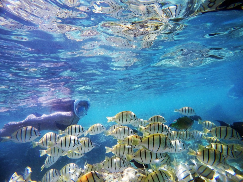 haunama bay snorkelling fish